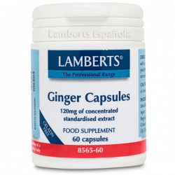 GINGER ROOT 14.400Mg. 60 CAPSULAS LAMBERTS
